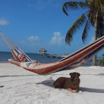 Relax in the Escape Away beach hammock - neighbors dog might drop by for a friendly visit.